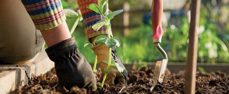 Hands-Gardening_i-3170x2280