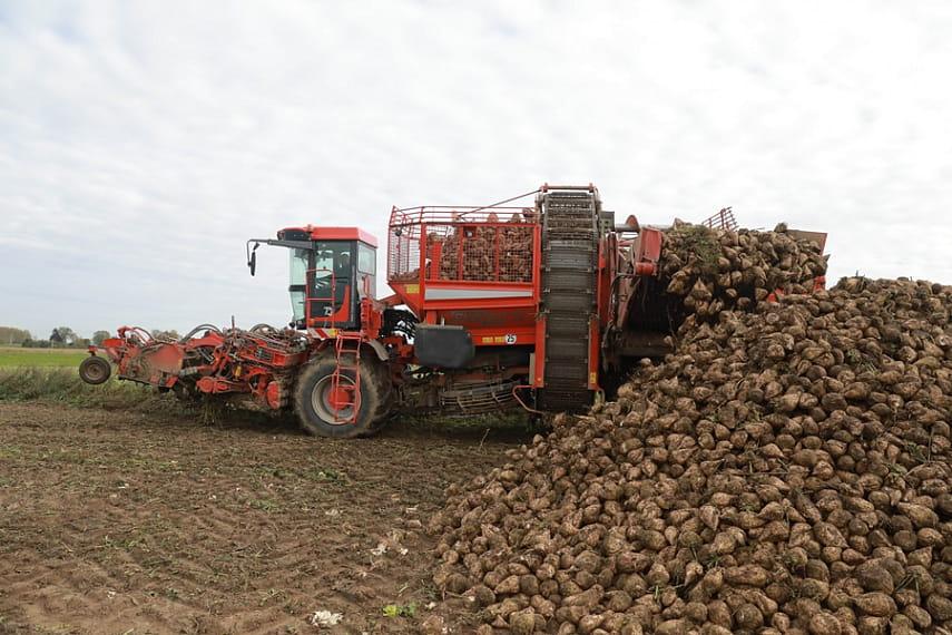 Урожай сахарной свеклы ожидается больше прошлогоднего - Слуцк Деловой