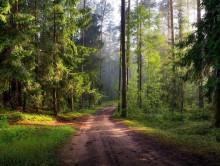 """В Слуцком районе прошла акция """"Чистый лес - 2019"""". Участвовали более 250 человек - Слуцк Деловой"""