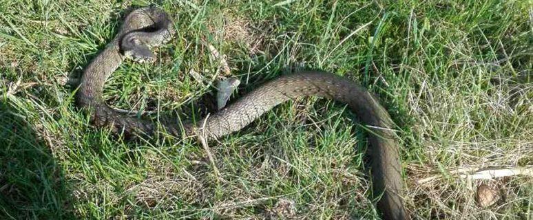 180425_snake-1140x760