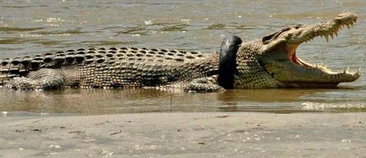 614-croc