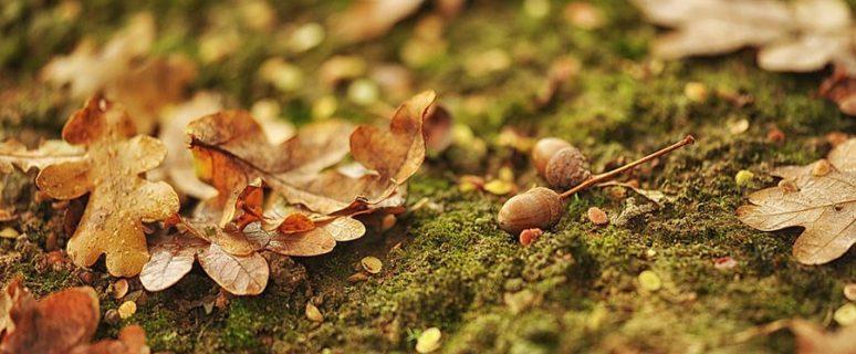 autumn-3146074_960_720