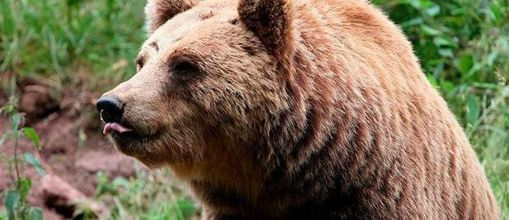 503-medved