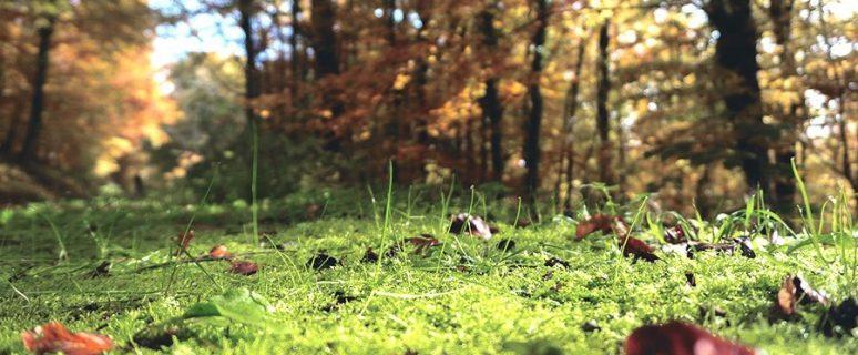 forest-floor-1031143_1920-copy