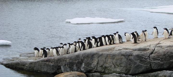 antarktika_28