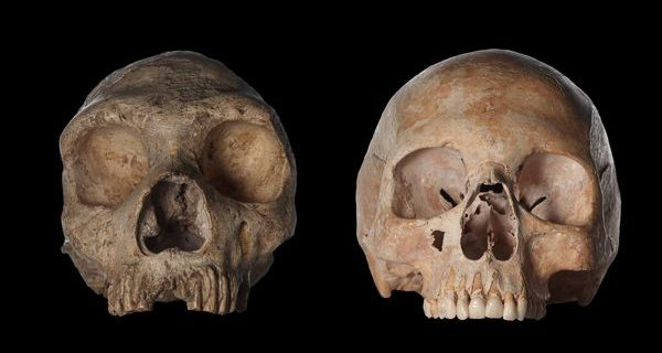 when-did-neanderthals-and-modern-humans-diverge