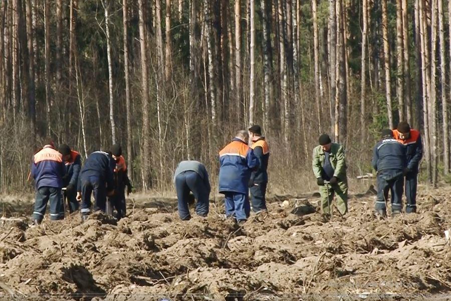 Случчане подключились к республиканской акции «Неделя леса» - Слуцк Деловой