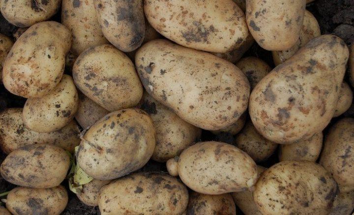 217-potatoes