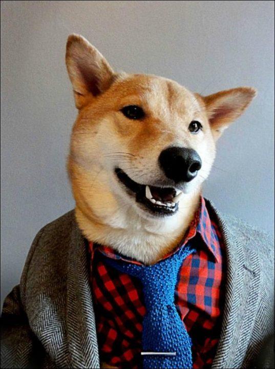 dog-style-03