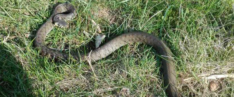 180425_snake
